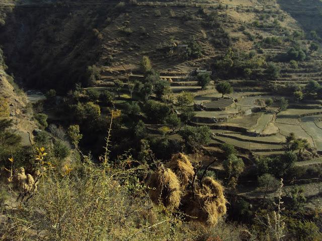tiger fall hills