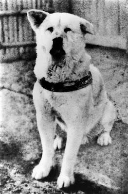 Câu chuyện về lòng trung thành của chú chó Hachiko