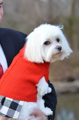 cute-petsmart-dresses-for-dogs