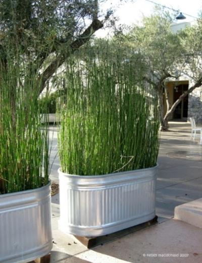 Memasang pot yang penuh dengan tanaman tinggi di teras adalah cara umum untuk menciptakan privasi. Sebaiknya gunakan tanaman bambu atau sejenisnya untuk menciptakan privasi di teras rumah.