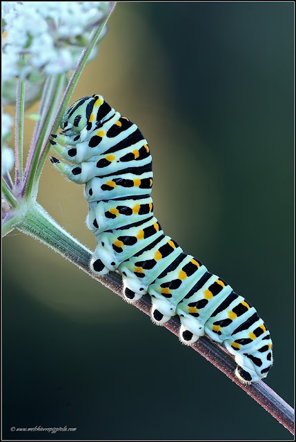beautiful images of insects