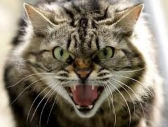 Download 97+ Gambar Kucing Galak Terbaru Gratis