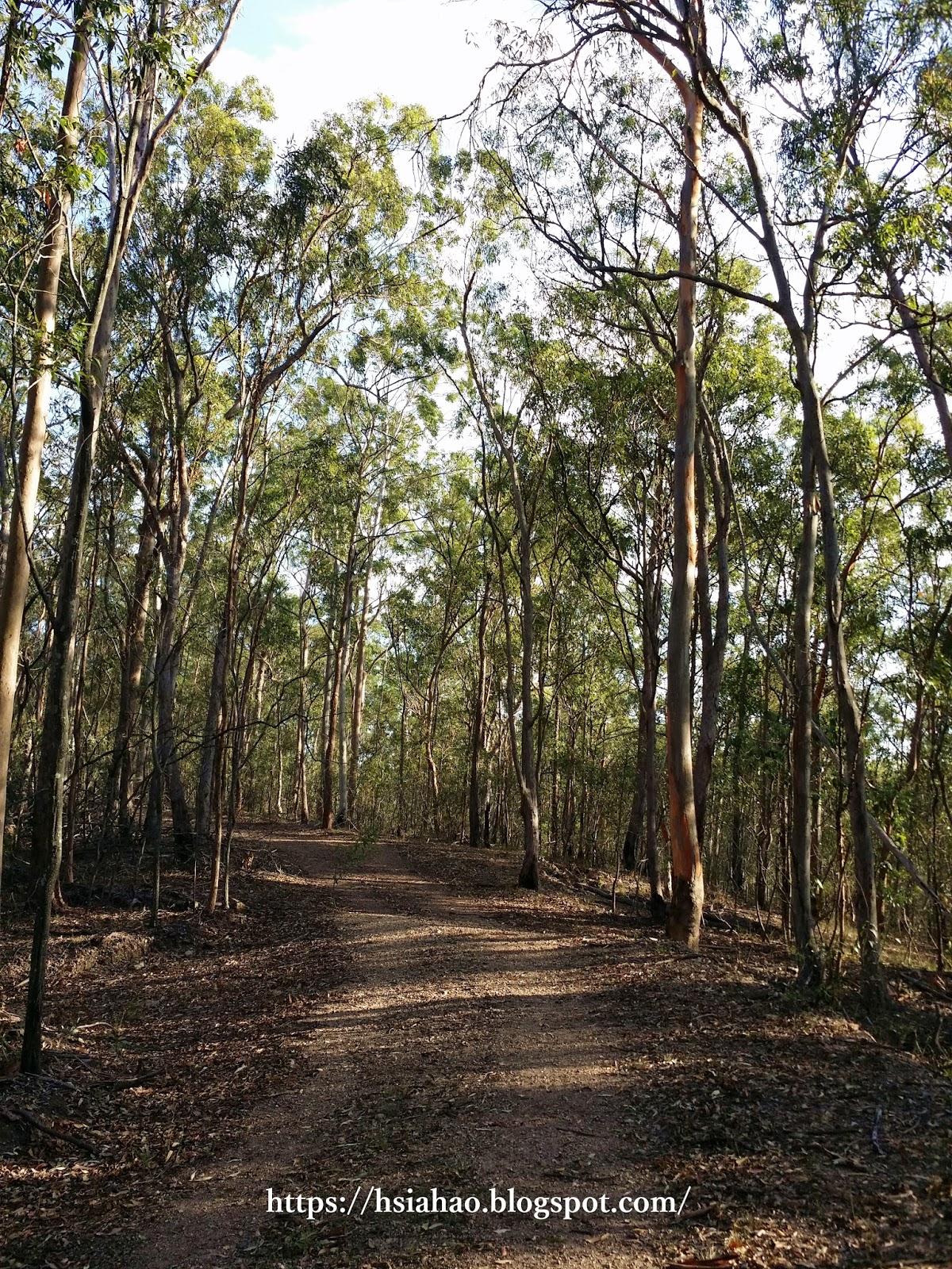 布里斯本-景點-庫薩山-市區-遊記-庫薩山登山步道-行程-Mt. Coot-Tha-Brisbane