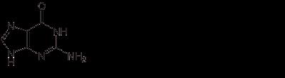 Bases%2Bnitrogenadas.png