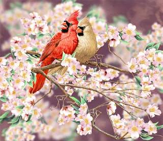 7 кардиналов
