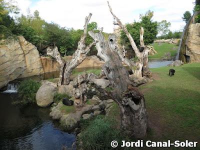 Hábitat de los chimpancés en Bioparc Valencia