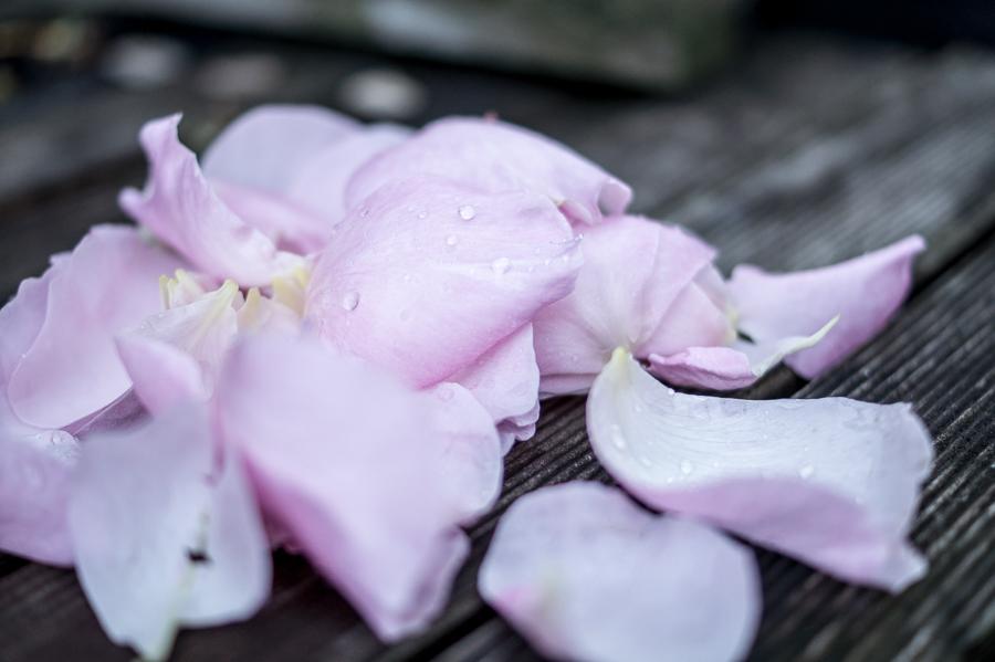 Blog + Fotografie by it's me! | fim.works | Sommerregen im Garten | Rosenblätter mit Regentropfen auf Holzbrettern