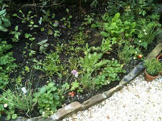 herb garden, life on pig row