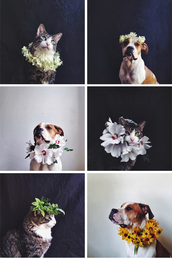 Monday Meow: Beautiful cat and dog photos from Ariele Alasko's Instagram feed