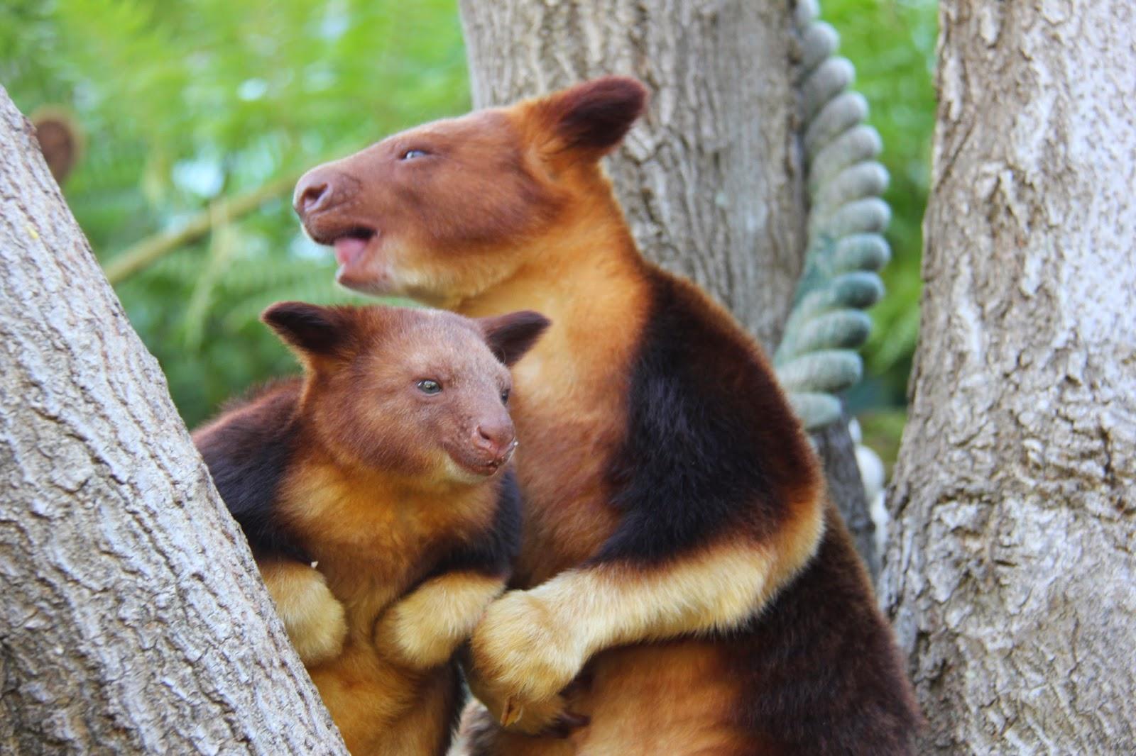 Small Animal Talk Weekend Read Tree Kangaroos