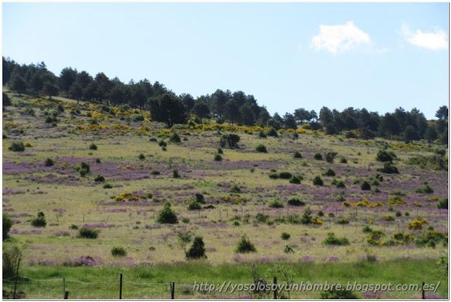 De colores se visten los campos en la primavera, de colores son...