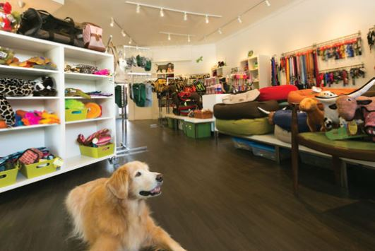 How to Start a Pet Store – 10 Ideas for You