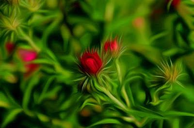 Herbstastern, autumn aster, 秋季翠菊, 秋アスター, efterår asters, automne aster, autunno aster,