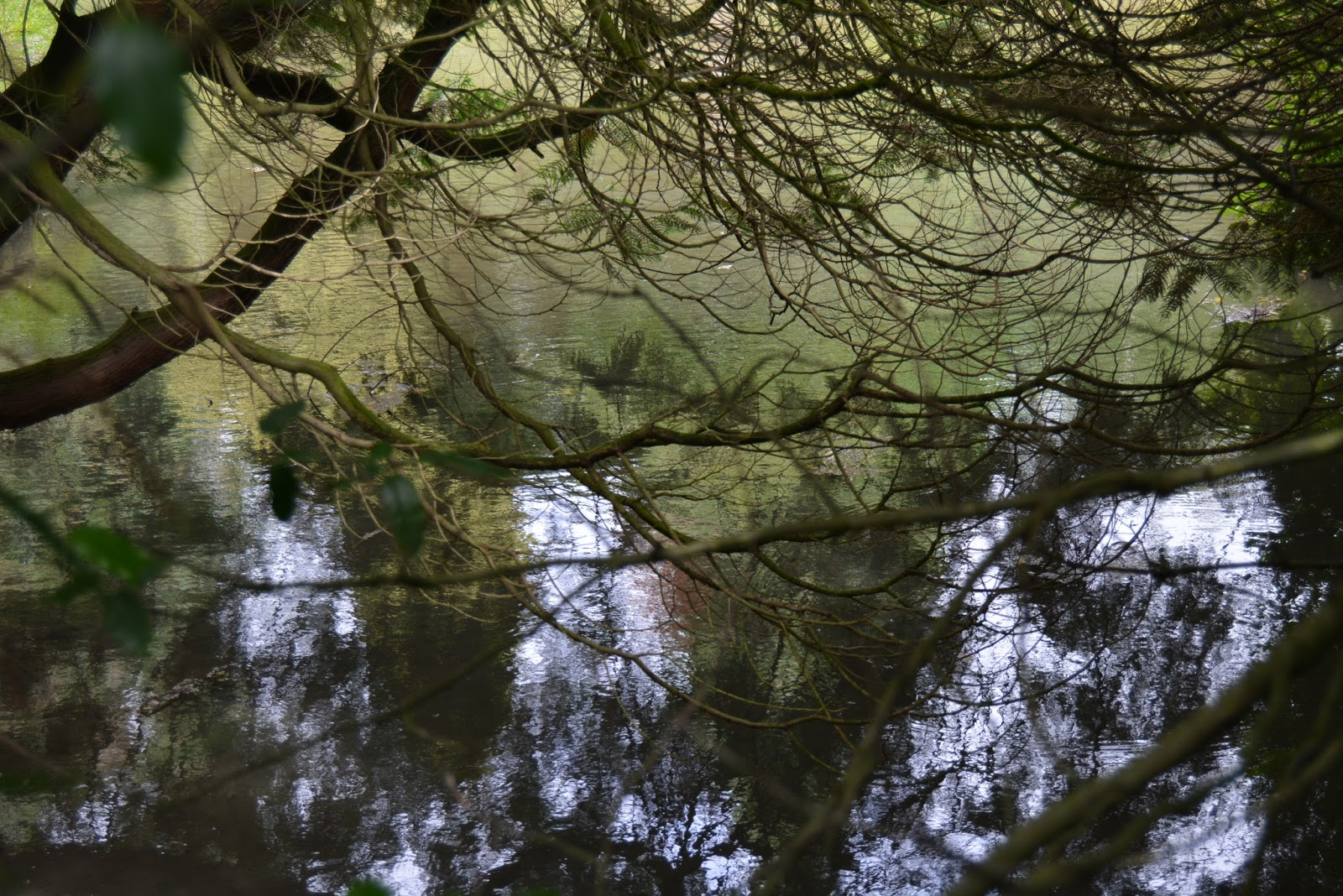 Forest, woods, reflections, photography, beauty, landscape, trees, nature
