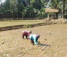 5 Kesulitan yang sering dihadapi oleh para petani