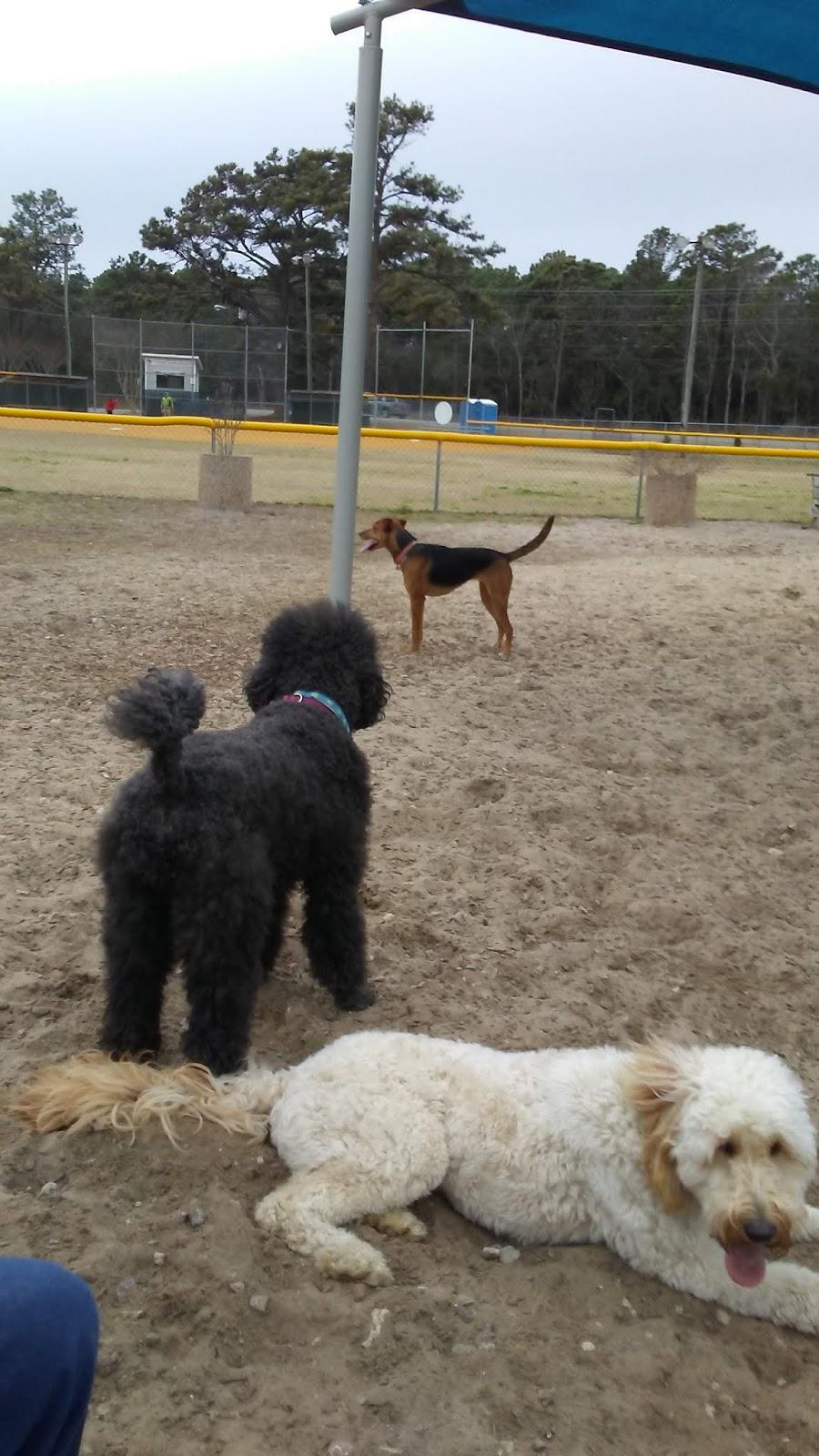 Charley's Healthy Dog Blog