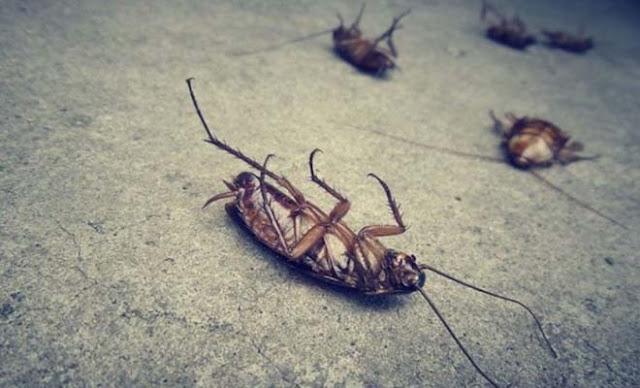 Ποια η φυσική μυρωδιά που δεν αντέχουν με τίποτα οι κατσαρίδες και τα μυρμήγκια!