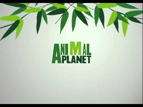 Animal Planet - Astra Frequency