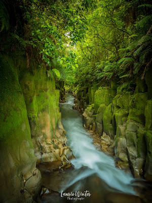 Te Whaiti-Nui-A-Toi Canyon, New Zealand, NZ, Rotorua, Whirinaki, Canyon, Whirinaki Conservation Park