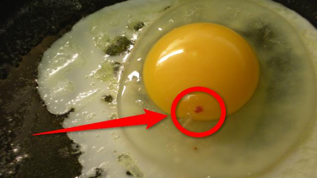 ما تأثير أكل البيض الذي به بقعة دم وأشياء أخرى يجب أن تعرفها عن البيض