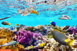 Cover Photo: Great Barrier Reef