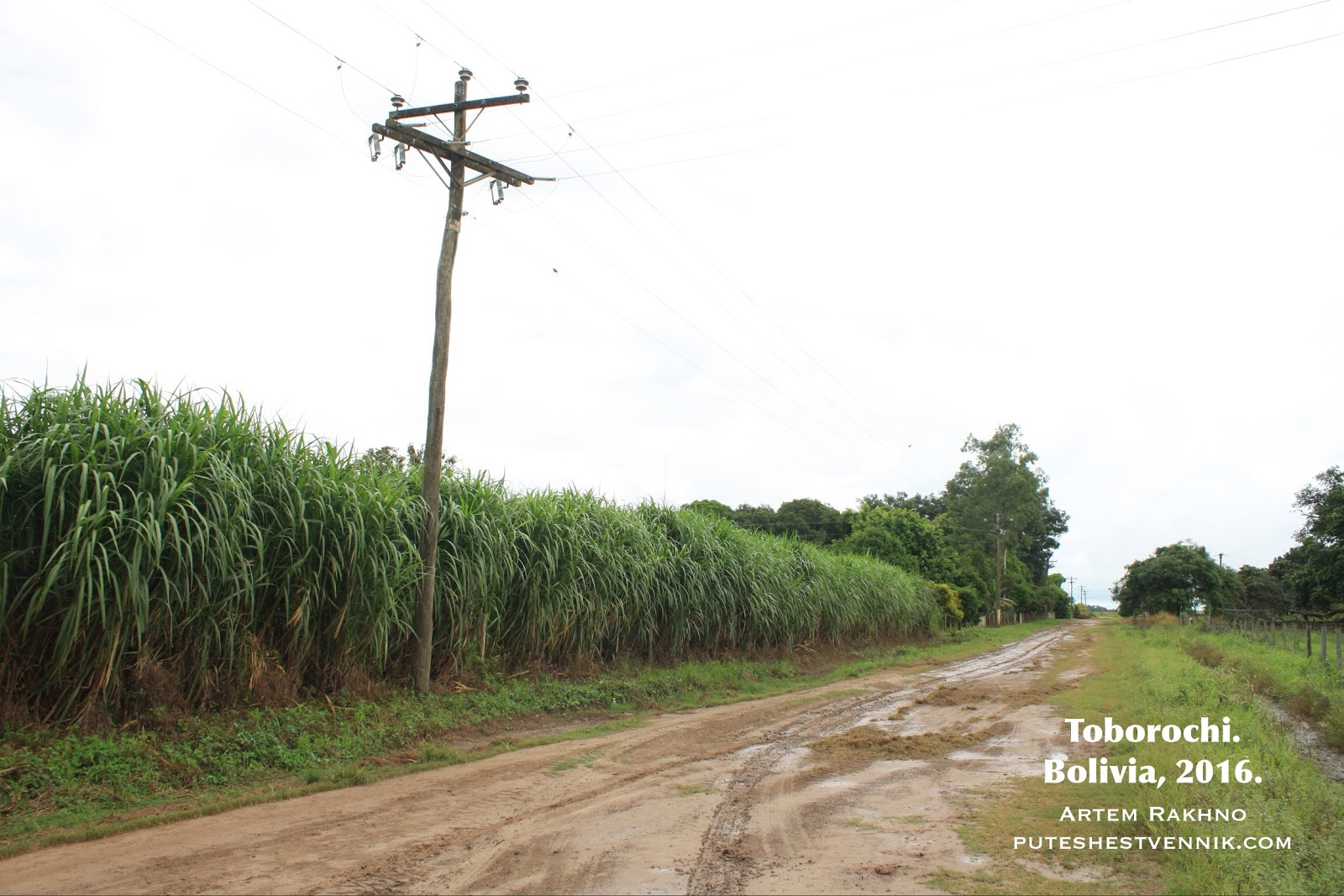 Дорога и сахарный тростник