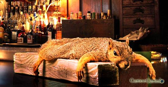 Esquilo bêbado invade bar, 'enche a cara' e da prejuízo de R$1.500 na Inglaterra