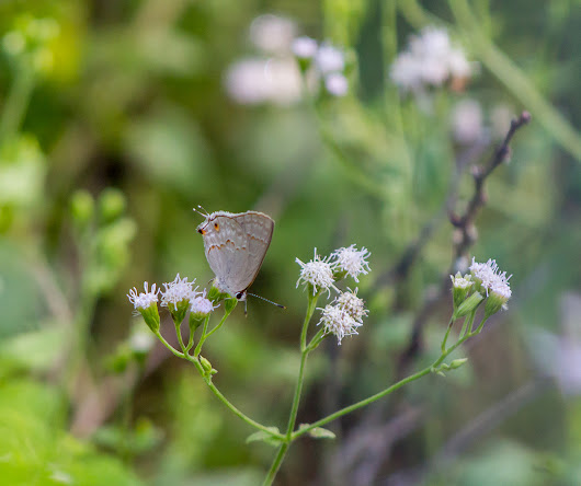 20th Annual Texas Butterfly Festival Field Trip Day 3