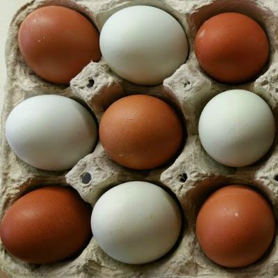 Kumpulan strategi jual telur ayam negeri  Distributor