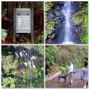 Slow Walk in Waitakere