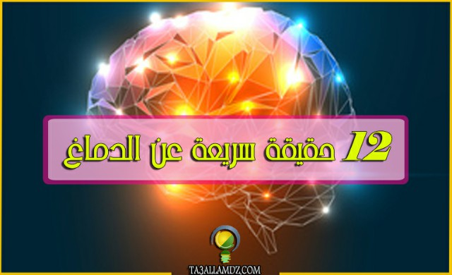12 حقيقة سريعة عن الدماغ