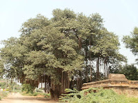 Darjipalli Marri Chettu;