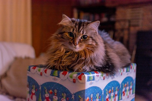 A Christmas Memory Box Is a Great Holiday Tradition Cat Sitting on Christmas Memory Box