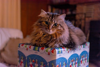 cat on Christmas box.jpeg