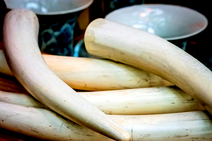 International Man on Domestic Ivory Markets