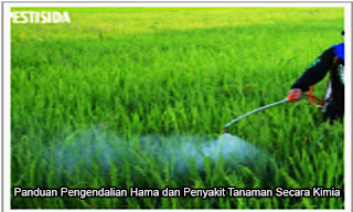 Panduan Pengendalian Hama dan Penyakit Tanaman Secara Kimia