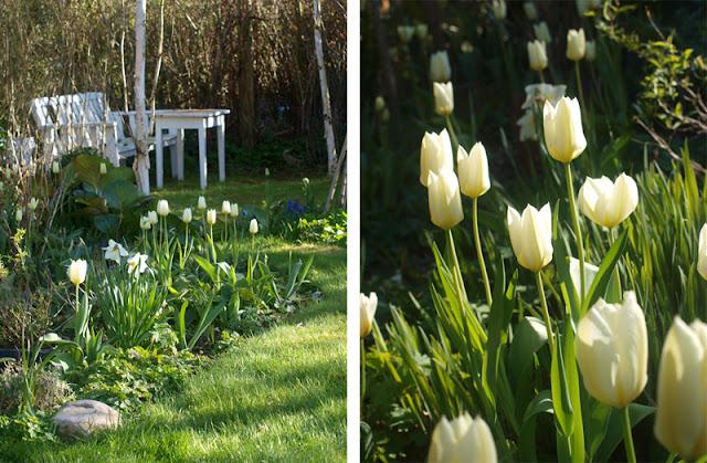 Haverum med hvide blomster