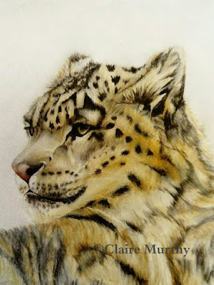 Wildlife Art and Wildlife Illustration
