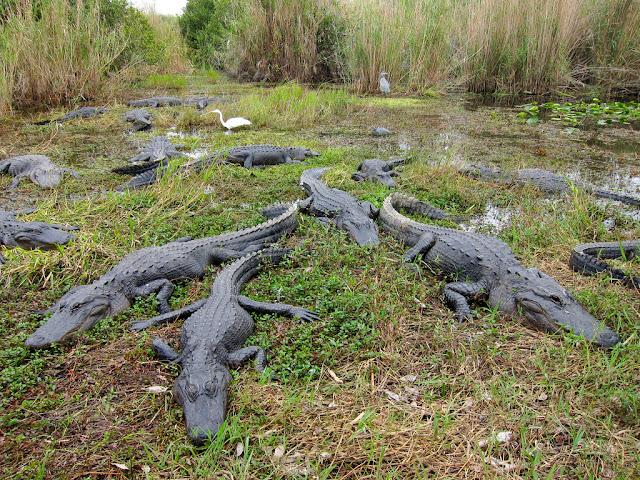 Evrglades National Park