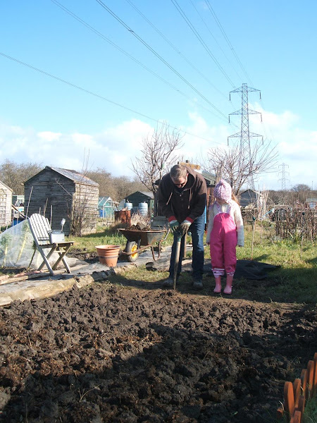 digging in march on the allotment