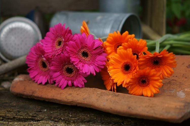 Gerbera, Pink + Orange { by it's me! }