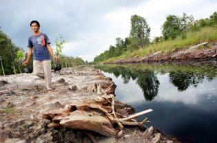 85ef0a2685 Can Heavily Deforested Sebangau National Park Be Saved
