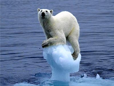 Aquecimento global, extinção, perda de espécies, desgelo, urso polar, espécie extinta, calota poláres