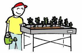adquirir sobre las tareas de cultivo y de un huerto urbano y todo tipo de plantas en casa balcones patios