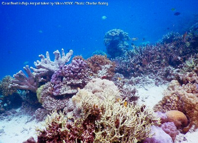 Freediving photo from drop off reef of Waigeo island