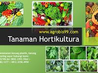 5 Cara Budidaya Tanaman Hortikultura, Yang Jarang Diketahui Banyak Orang!