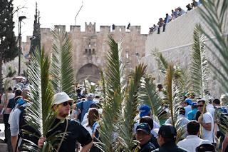 terra santa jerusalem - domingo ramos