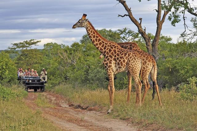 Rovos Rail mit Safari