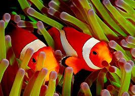 Nemo Wallpapers