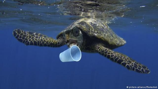 GET PLASTIC: Sulap Sampah Plastik Jadi BBM Demi Lindungi Laut Indonesia